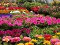 Flower Store Near Me