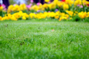 Lawn Care Services Pittsburgh