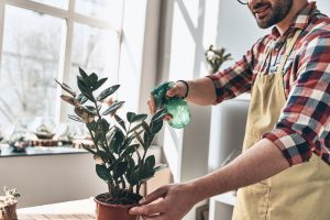 Man Caring for house plants