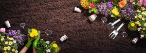 Planting Flowers for Garden