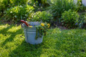 Bucket of Weeds in Yard