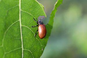 Pests on Plants