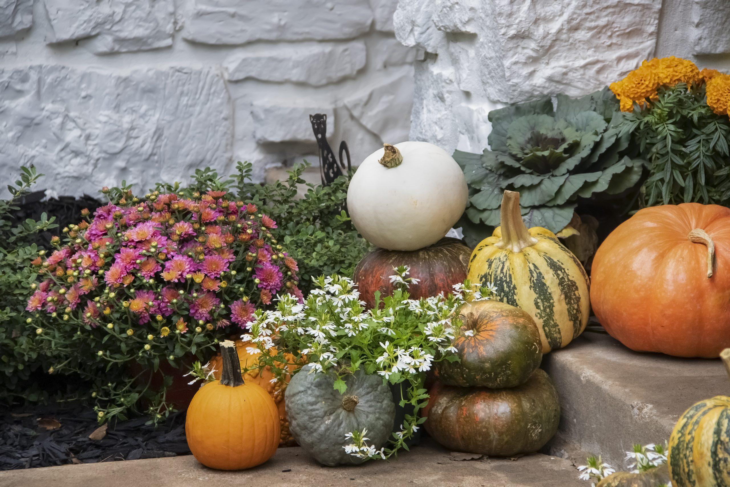 Fall Garden Planting
